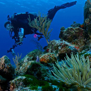 Scuba Diving Courses Cozumel Mexico