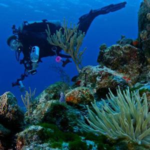 Scuba Diving Courses Cozumel Mexico